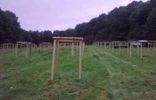 Orchard tree guards at Wyre Forest