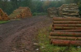 Timber harvesting 2012 Butlers Hill Wood